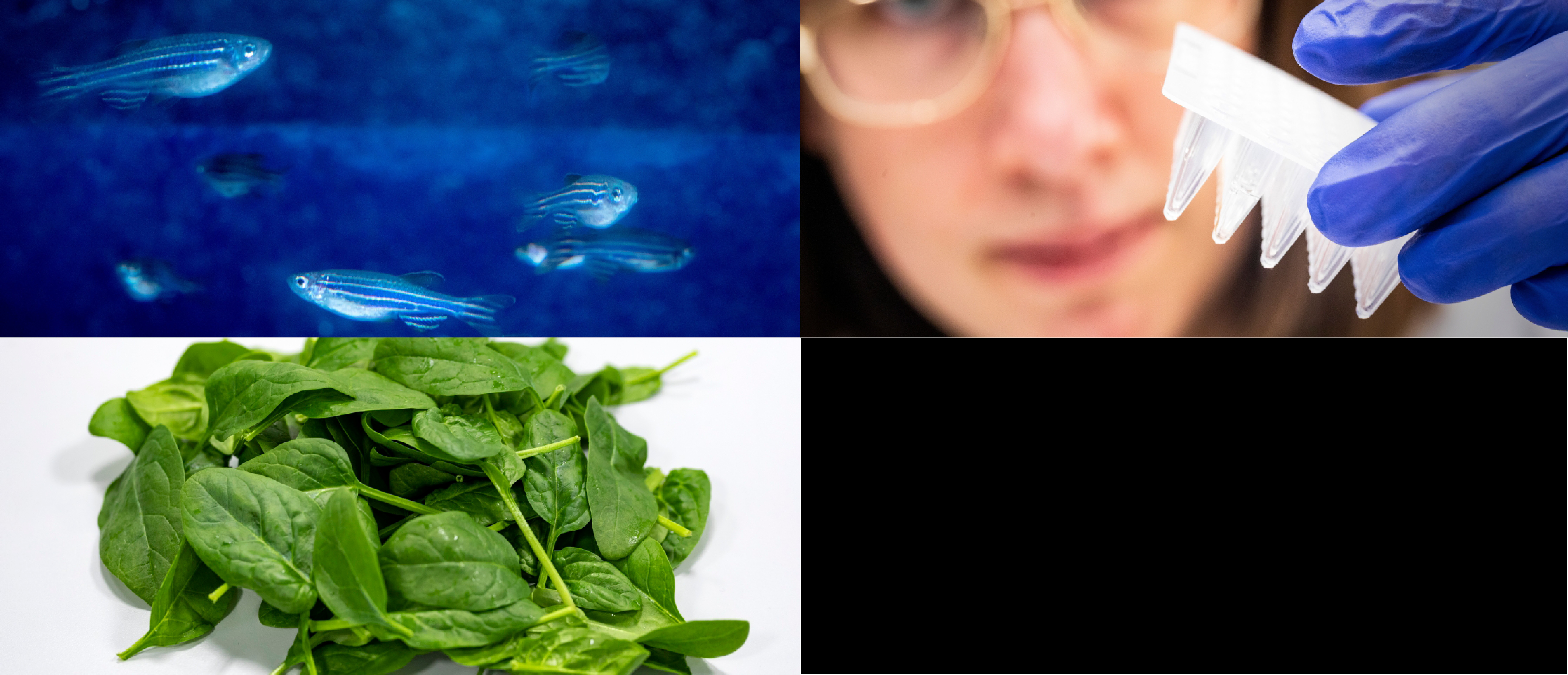 Picture with zebrafish, green leaves and eppendorf tubes